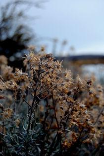 Flowersin Patagonia. by Adriana Schiavon