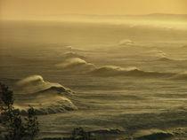 Surfing on the sunset by Adriana Schiavon