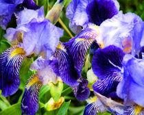 Blauer Mischmasch by mimulux