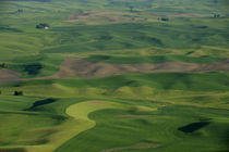 View From Steptoe Butte of Rolling Hills with Fields by Wolfgang Kaehler