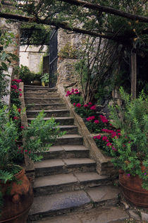 Steps with Geraniums Q by Wolfgang Kaehler