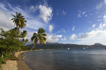 Beach with Coconut Palm Trees von Wolfgang Kaehler