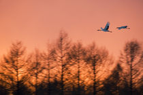 In Flight at Sunset by Wolfgang Kaehler