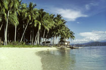 Coastal Village with Coconut Palms &Amp; Canoes by Wolfgang Kaehler