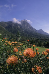Table Mountain by Wolfgang Kaehler