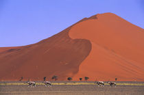 Sand Dune with Oryx by Wolfgang Kaehler