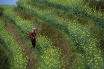 Zhuang Woman In Canola Field (Rape Seed) by Wolfgang Kaehler