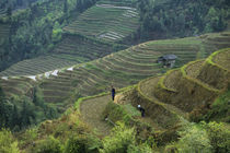 Farmers Working In Terraced Fields by Wolfgang Kaehler