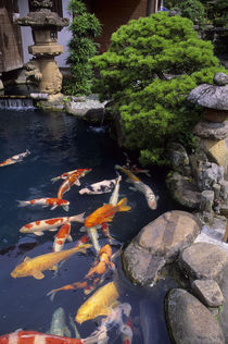 Pond with Colorful Koi von Wolfgang Kaehler