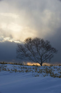 Tree on Crater Slope In Sunset with Dramatic Clouds by Wolfgang Kaehler
