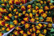 Close Up of Tulips by Wolfgang Kaehler