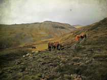 Gathering sheep in the Highlands of Iceland, using horses by Kristjan Karlsson