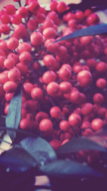 Vintageberries