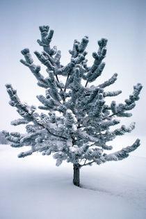 Velvet Tree 613 by Patrick O'Leary