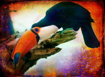 Finer-feathered-friends-toucan