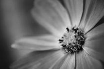 Fleurdeluneprint