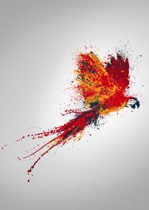 colorful parrot by axel haudiquet