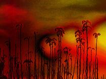 Stalks by Robert Ball