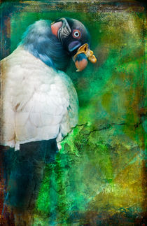 Finer Feathered Friends:  King Vulture by Alan Shapiro