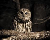 Curious Owl by Joanna Kapica