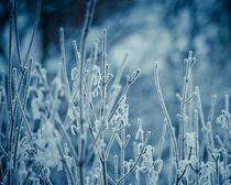 Frosty Morning von Joanna Kapica