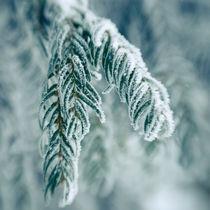 Snow Covered Branch von Joanna Kapica
