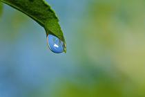Waterdrop-ii