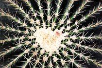 Cactus-love