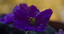 Violet-a