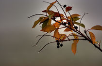 Elements of fall... by Michael Latman