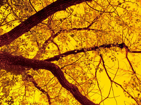 Abstract-art-trees-braches