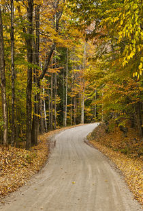 Autumn country road, Vermont, USA by John Greim