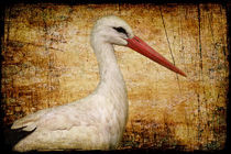 Herr Storch von AD DESIGN Photo + PhotoArt