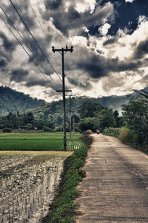 Rice Field - Chaing Mai by Gianluca Colombi