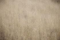 California Grasslands by Douglas Sterling
