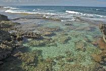 Kaena Point Beach von Michael Peychich