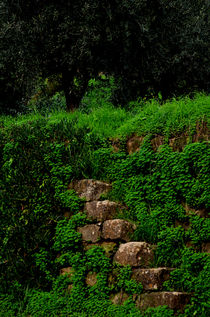 Stone stairs with grass. by turi-caggegi
