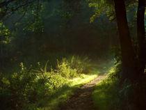 Sommermorgenlicht von Franziska Rullert