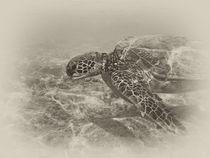Green Sea Turtle von Michael Peychich