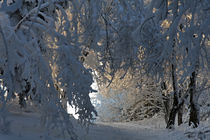 Weg durch den Winterwald by Wolfgang Dufner