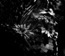 Mariposa-en-la-flor
