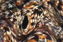 Indonesia-bali-island-tridacna-maxima