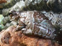 Frosch im Kölner Zoo von Kathrin Kiss-Elder