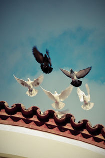 "Take off (Or ""Flight of the pigeons"") von George Panayiotou"