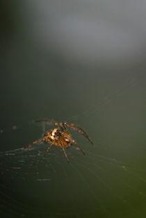 Spider by Deyan Sedlarski