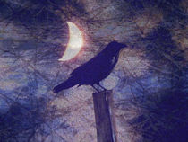 Midnight Crow by Robert Ball