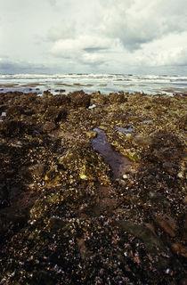 Normandy beach 16 by Razvan Anghelescu