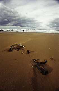 Normandy beach 9 by Razvan Anghelescu