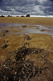 Normandy beach 7 by Razvan Anghelescu
