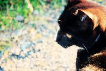 Black cat von Geneviève Khayat